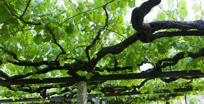 mejores vinos de cambados