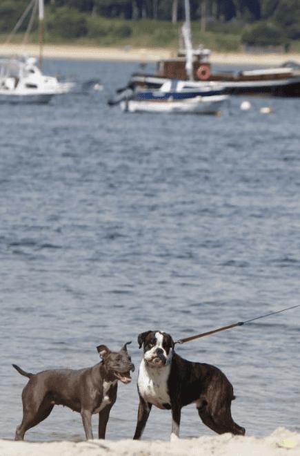 playas para perros en pontevedra