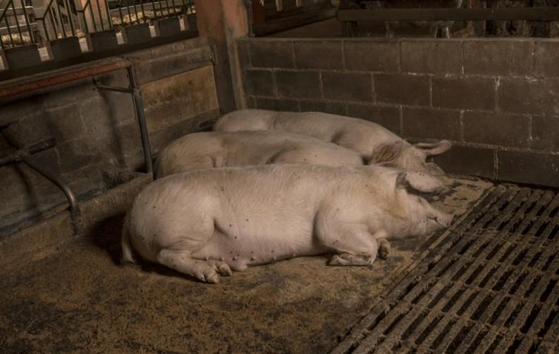 Una de las más conocidas granjas escuela en Galicia