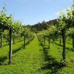 Vinho Verde de Oporto